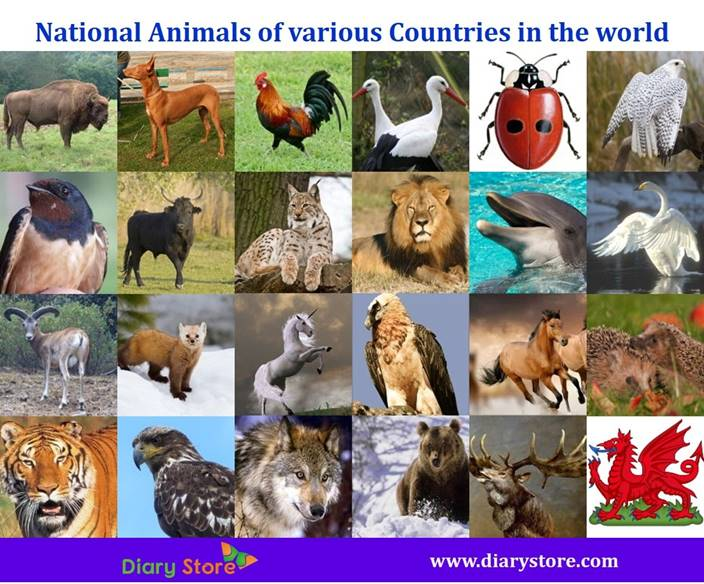 National Animals Of Various In The World Countries Animals