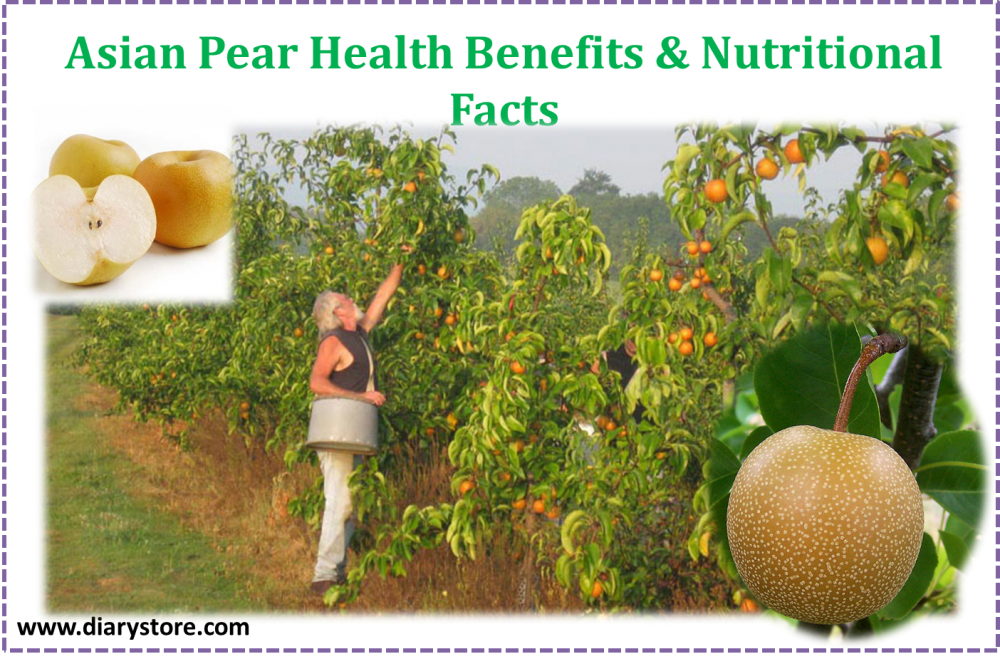 Asian pear nutritional facts not pay