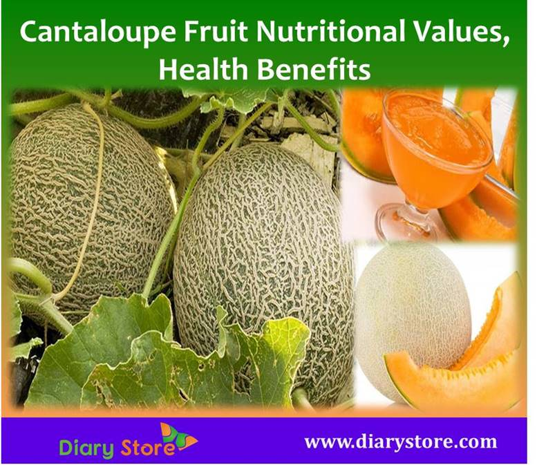 Cantaloupe Fruit Nutritional Facts Health Benefits Diary Store Cantaloupe is a trailing vine that can reach up to 5 feet in height/length thanks to numerous tendrils that bind to the nearby objects. cantaloupe fruit nutritional facts