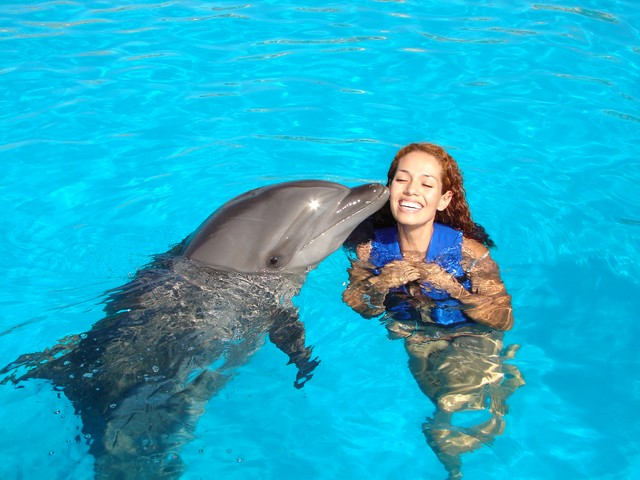 dolphin discovery anguilla st maarten diary store