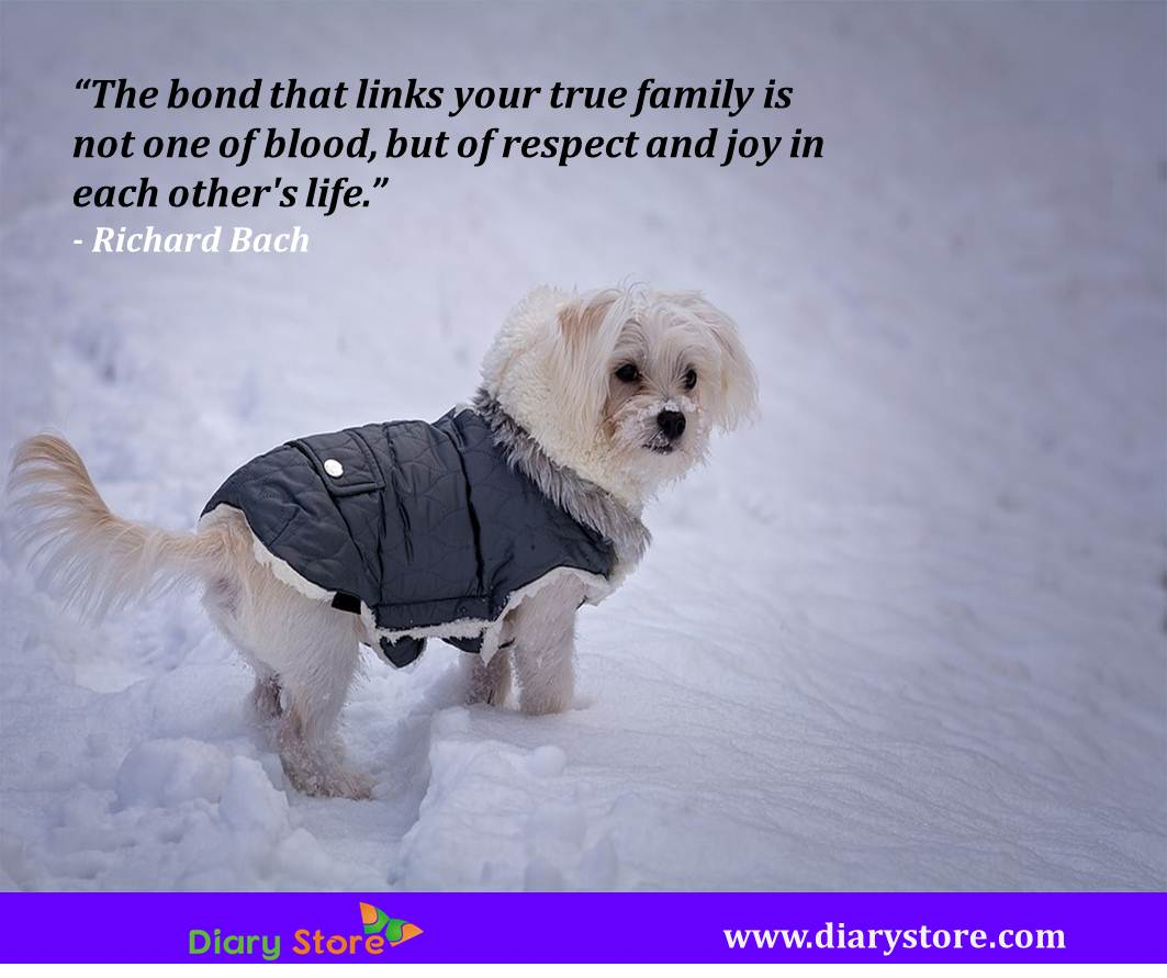 Family Quotes | Quotations Family | Best Quotes Family Relations