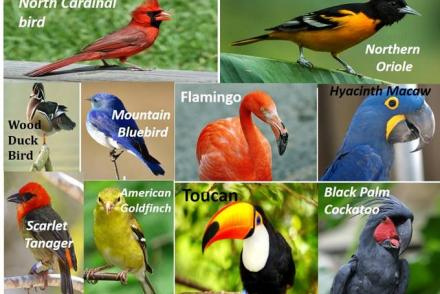 World Costliest Birds